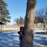 A child hugging a tree in a park during the winter.