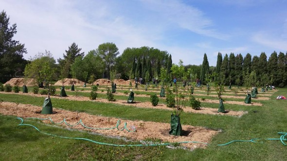 Community Orchards Planting