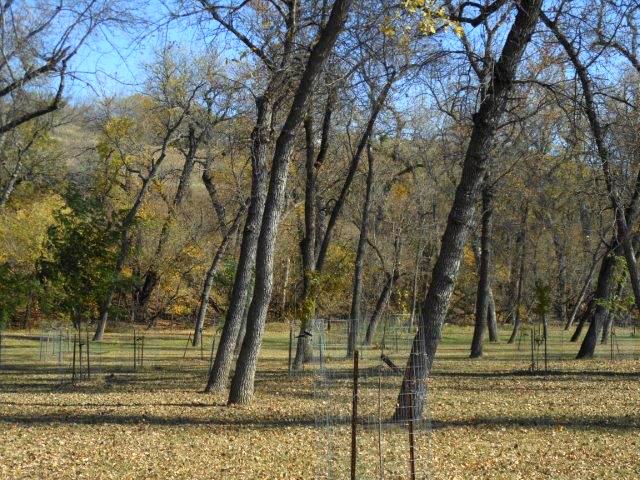 Pioneer trees 15-1