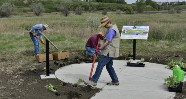 Pollinator Garden Planting 2