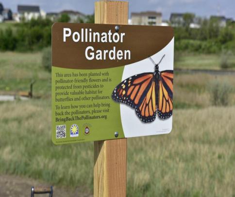 Pollinator Garden Planting 5