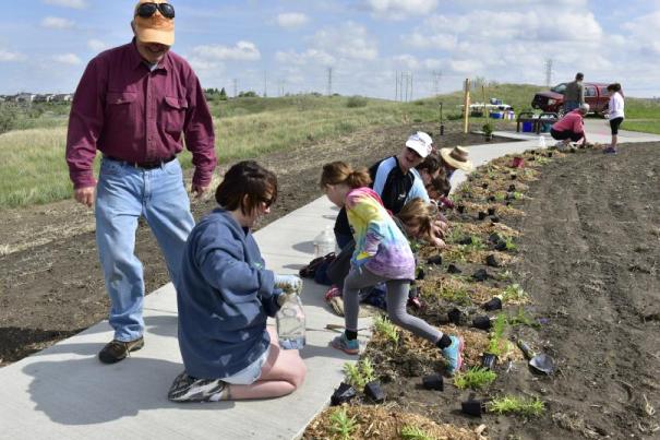Pollinator Garden Planting